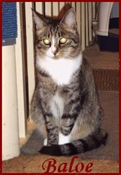 Grote foto kattenoppas katinka amsterdam en omstreken diensten en vakmensen katten verzorging oppas en les