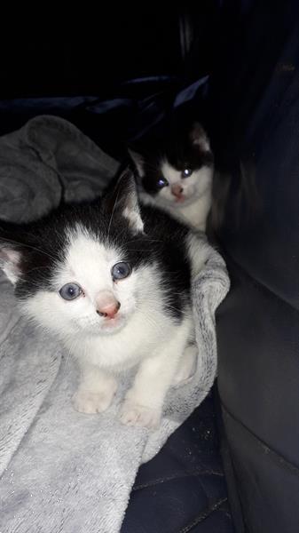 Grote foto mooie kitt eens dieren en toebehoren overige katten