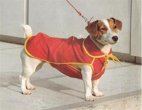 Grote foto hondenjas dover dekje 7 50 incl. verzending dieren en toebehoren toebehoren