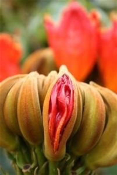 Grote foto vaginale yoni massage voor vrouwen erotiek erotisch personeel