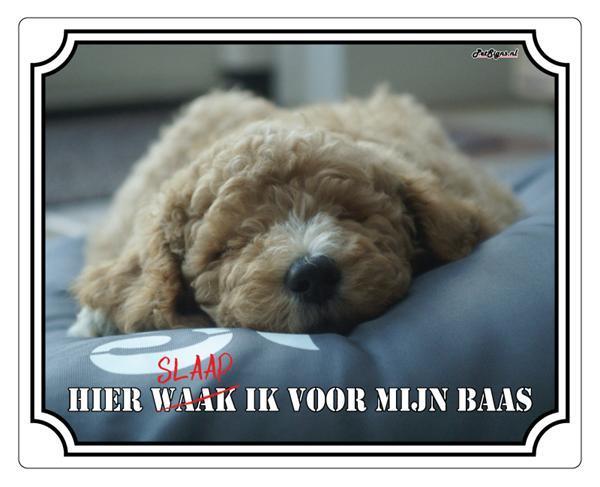 Grote foto waakbord van uw eigen huisdier en tekst dieren en toebehoren toebehoren
